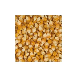 MAIS POP CORN 1KG